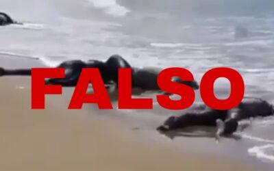 Es falso el video que muestra supuestos cadáveres de ecuatorianos arrojados al mar
