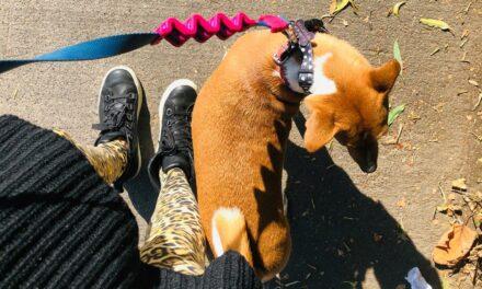 Dueños de mascotas desatan ola de reclamos por limitación a permisos temporales en cuarentena