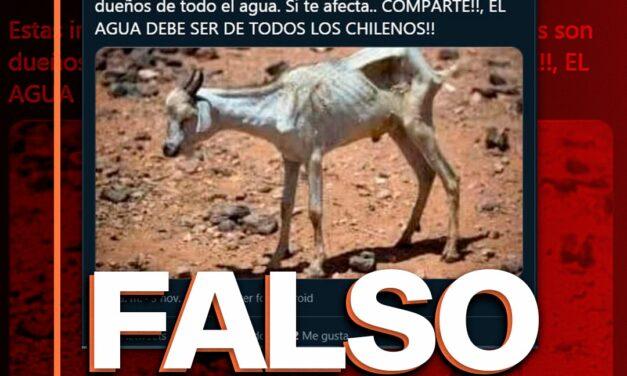 Es falsa la foto que muestra una cabra desnutrida en Petorca